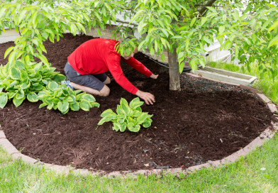 Briefly Information About Different Types Of Mulch And Wholesale Mulch Suppliers