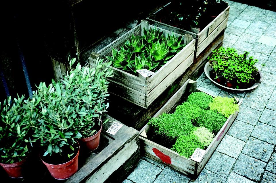 Gardens nursery Plants