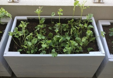 A Brief Guide on Concrete Planter Boxes